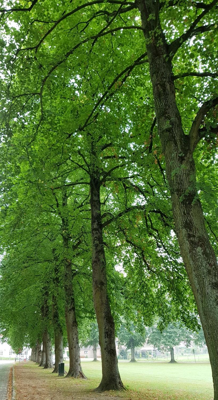 lificationbyjo trees
